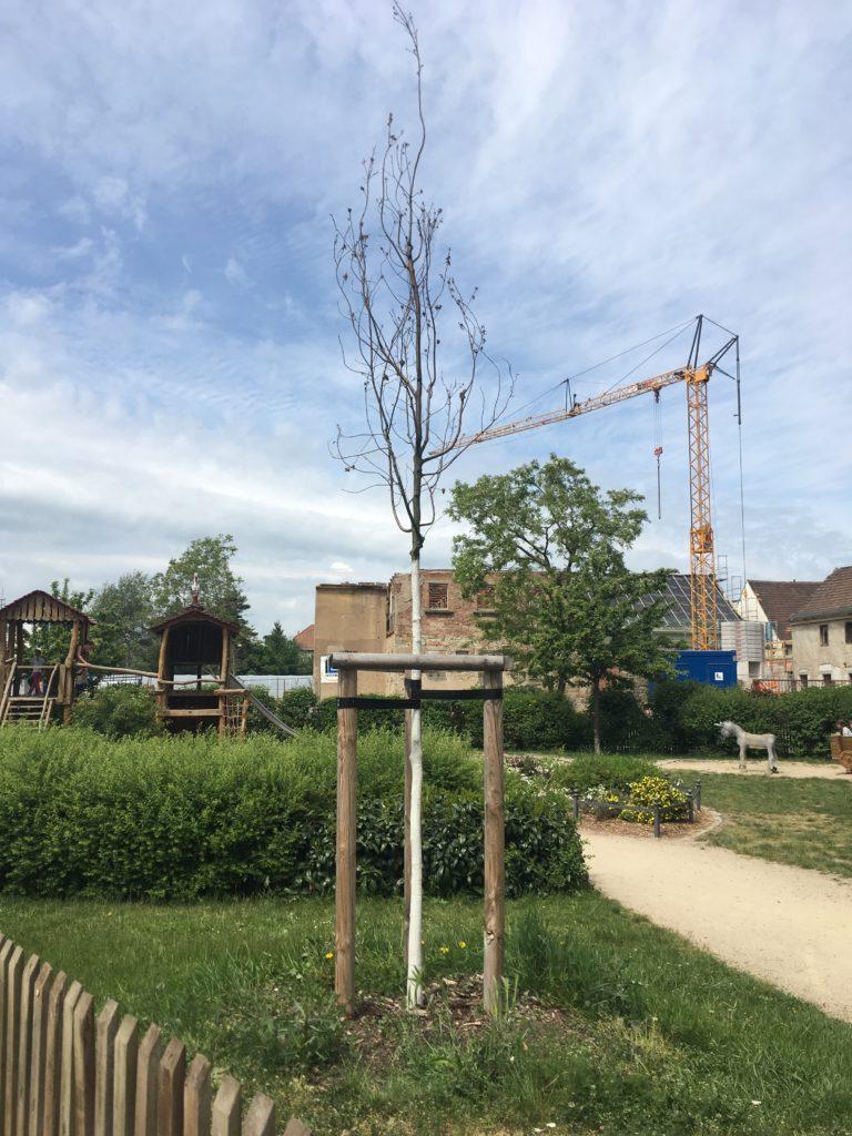 Update 24.05.2020: der neu gesetzte Jungbaum sieht nicht gerade lebendig aus, um nicht zu sagen, er ist tot!